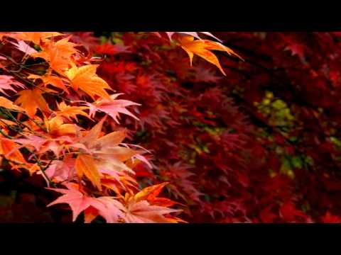 Karunesh-Autumn Leaves