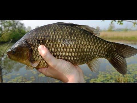 Łowienie karasi