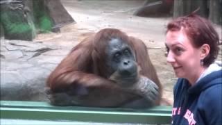 happy monkey , małpki w  zoo
