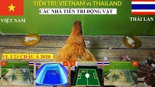🔴 VIỆT NAM vs THÁI LAN: Các Nhà Tiên Tri Động Vật dự đoán kết quả trận đấu (VL U23 Châu Á 2020)