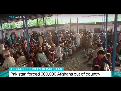 Afghan Refugees in Pakistan: Pakistan forced 600,000 Afghans out of country
