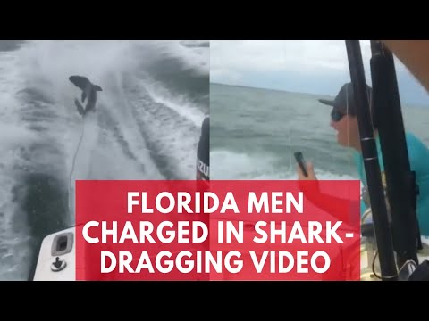 Shocking video of shark dragged by speed boat leads to arrests