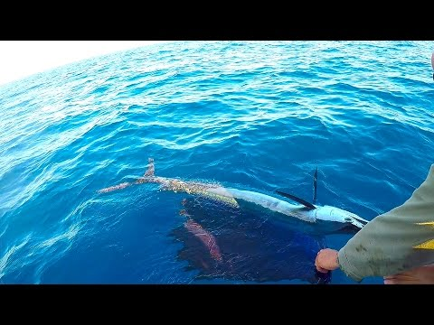Offshore Kayak Fishing Sailfish, King Mackerel and a sea monster !