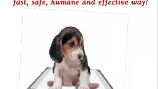Puppy Pad Training - get help from Doggy Dan's video dog training program!