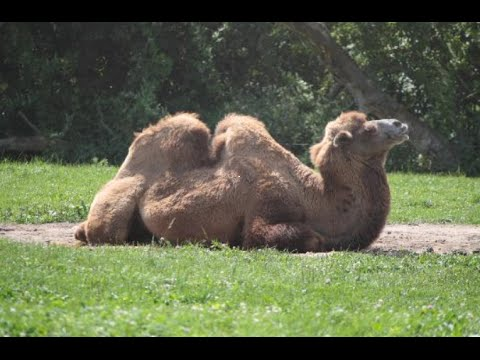 visiting-animals-in-bowmanville-zoo-|-zoo-in-bowmanville-|-ontario-|-canada