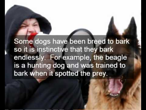 How To Get A Dog To Stop Excessive Barking