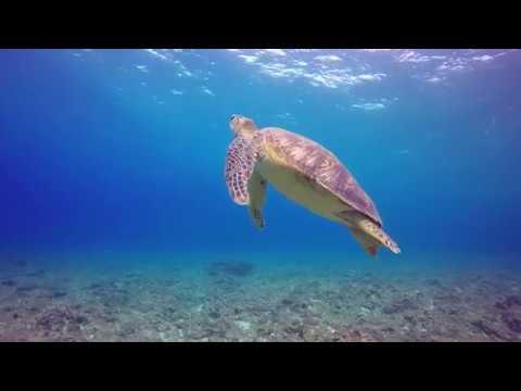 Marine turtle minute in Con Dao