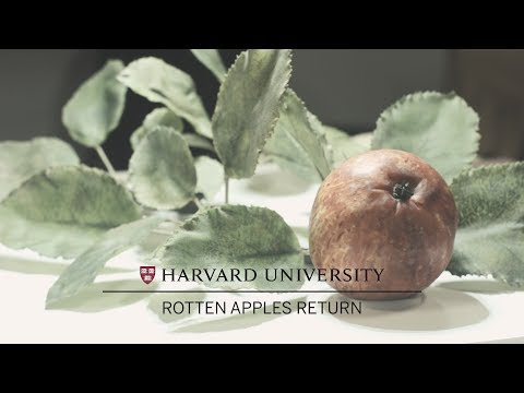 Rotten Apples Return to Harvard's Glass Flowers exhibition on YouTube