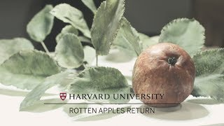 Rotten Apples Return to Harvard's Glass Flowers exhibition thumbnail
