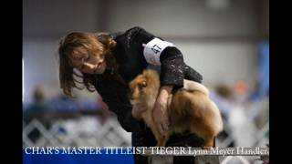 Pomeranian Club Of Greater Baltimore's 2009 Sweepstakes