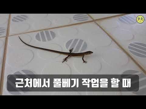 [자연 다큐] 도마뱀 2019년 9월 17일 (1080 60fps)
