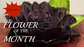 Flower of the Month - DIY Paper Flowers February 2015 Black Dahlia |An Inkin' Stampede