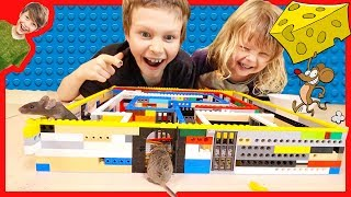 MAKING A LEGO MAZE FOR REAL MICE!