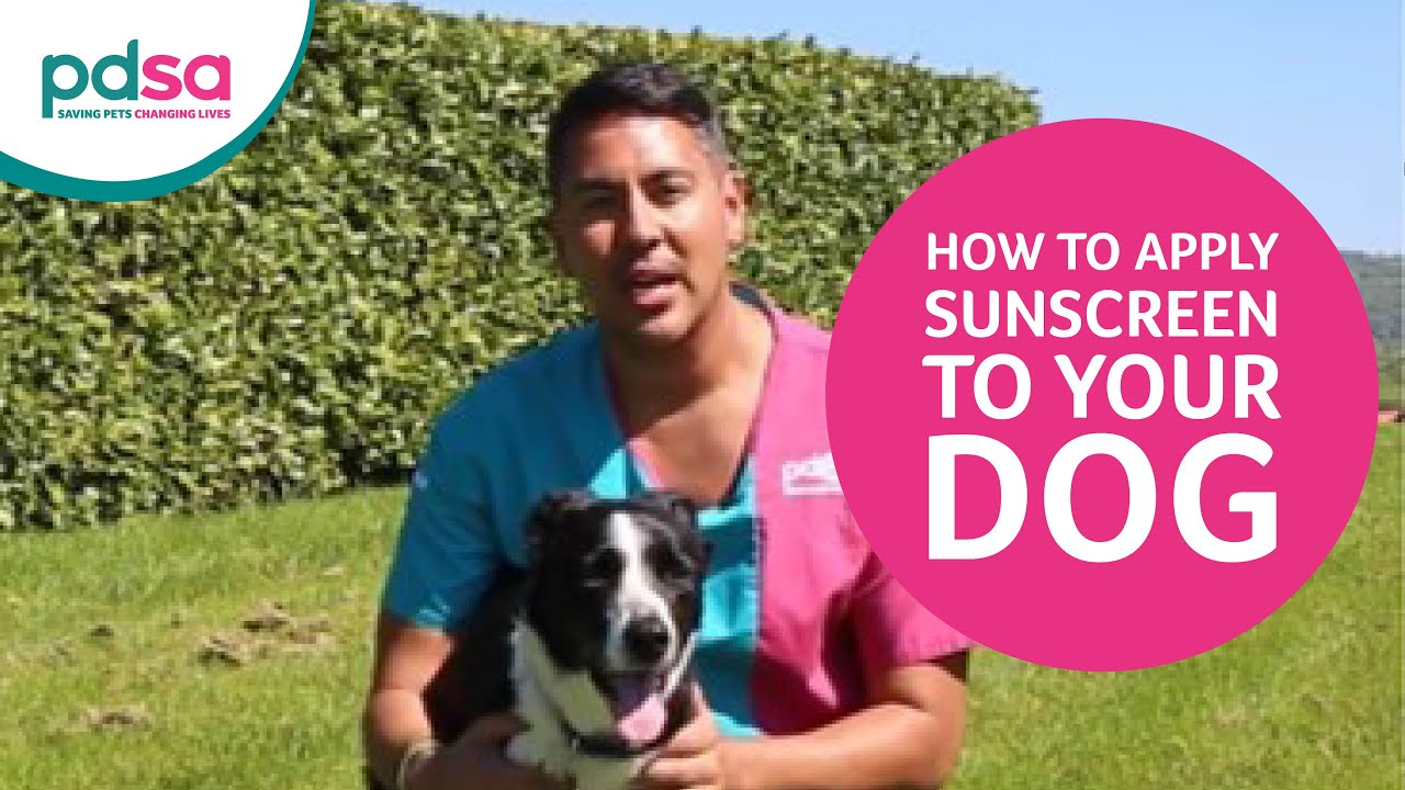 How To Apply Sunscreen To Your Dog Youtube