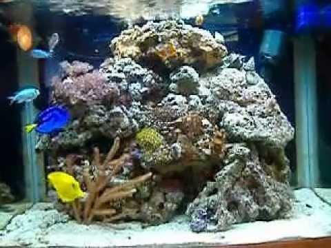 100ltr marine fish tank nano   YouTube