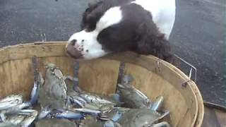 Dogs vs. Crabs