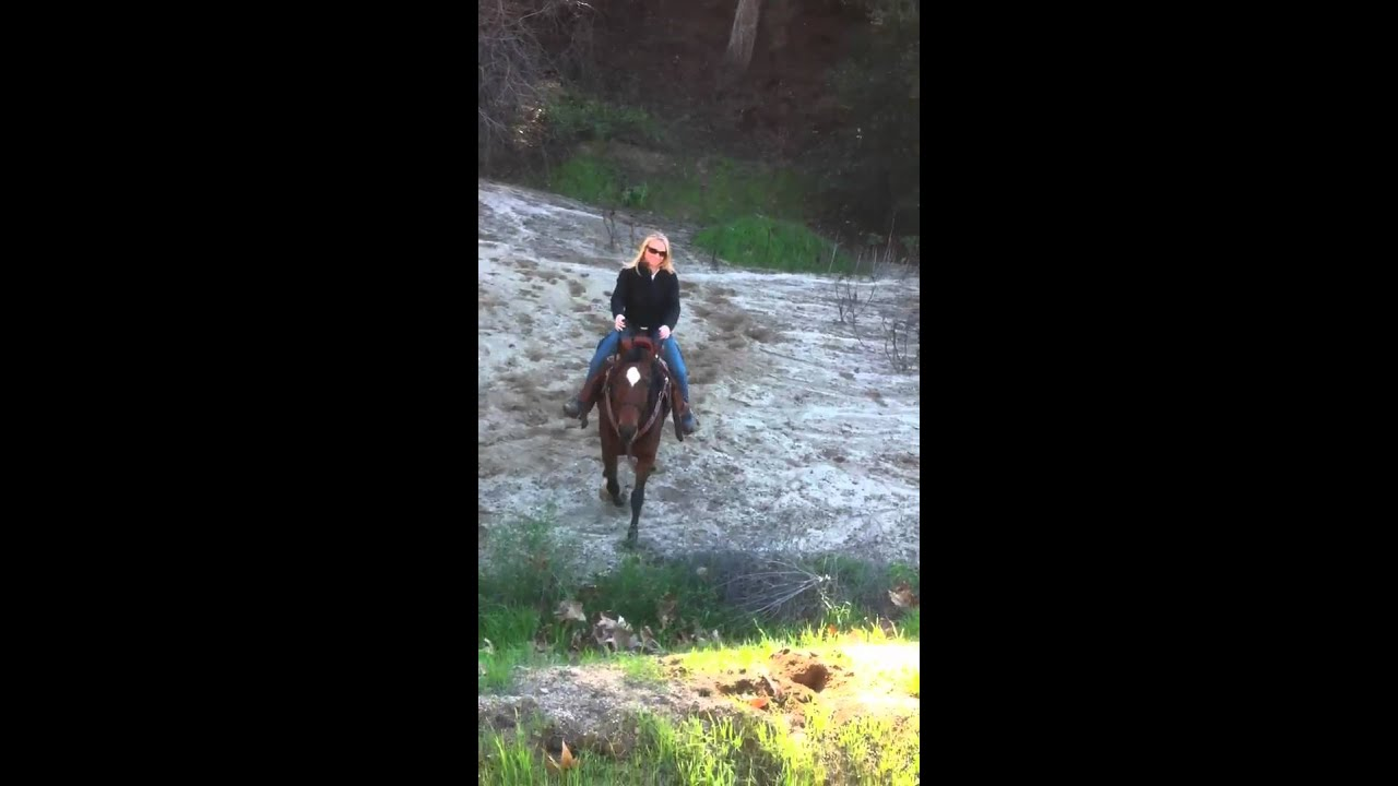 2273882bb Ginger and Irish thinking he s a mountain goat - YouTube