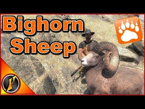 Bighorn Sheep Hunt | theHunter Classic 2018
