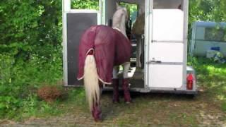 faire monter un cheval dans le van