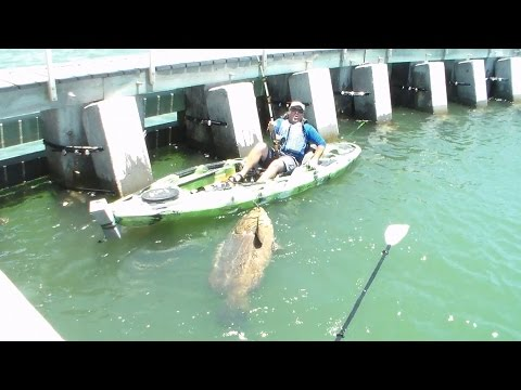 Un pescador de florida atrapa un mero de 552 libras