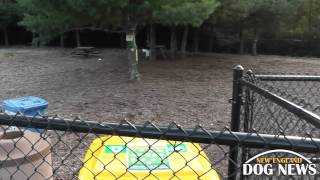 MA Dog Park: Franklin Dog Park- Franklin, Massachusetts