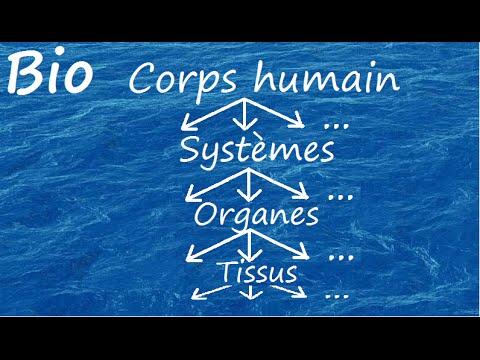 Organisation du corps humain youtube for Interieur du corps humain photo