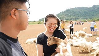 WE GOT SHEEP! (in Vietnam)