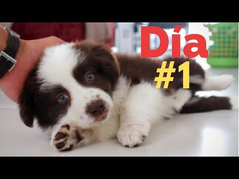 El PRIMER DA con un CACHORRO - Adiestramiento Canino