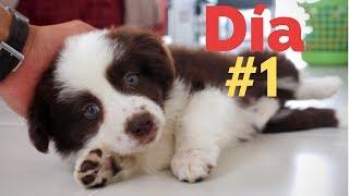 El PRIMER DÍA con un CACHORRO  Adiestramiento Canino