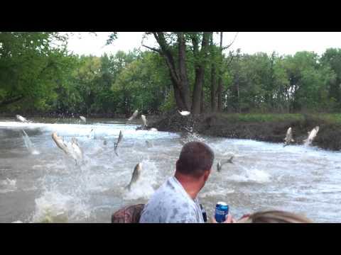 Wabash River Asian Carp Attack