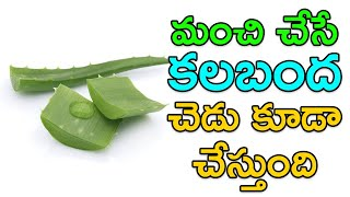 మంచి చేసే కలబంద చెడు కూడా జరుగుతుంది తెలుసుకోండి.. Major Side Effects of Aloe Vera Telugu   Picsartv