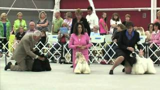 The 2012 Cocker Spaniel National Specialty