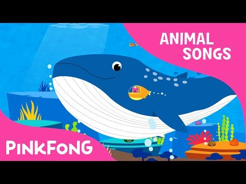 Whoosh, Blue Whale  Blue Whale  Animal Songs  Pinkfong Songs for Children