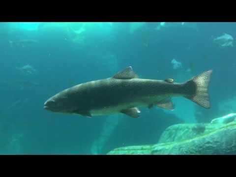 Underwater, Rainbow, brown, trout, fish, Arctic, Polar bear, Arctic adventure,