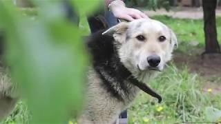 Кинокомпания «Союз Маринс Групп» помогает приютам для животных