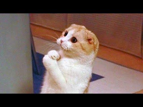 Les Chats Sont Si Droles Que Vous Pouvez Mourir De Rire Funny Cats Videos Youtube