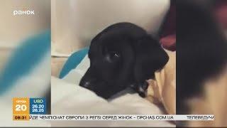 Жестокое убийство щенка в Турции: что произошло?