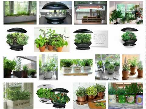 How To Grow An Indoor Herb Garden YouTube