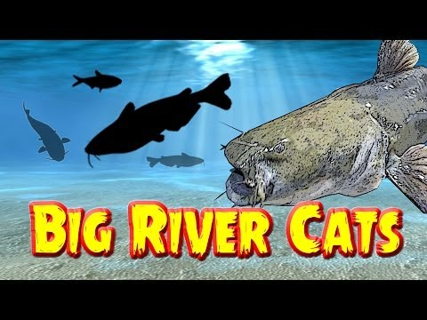 Kanawha River Flathead Catfish Trip
