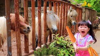 Download lagu Kasih Makan Kuda Poni Singa Burung Ikan Monyet - Belajar Tentang Hewan Binatang