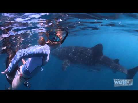 Travel Tips - How to Photograph a Whale Shark Underwater