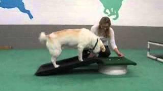 Training A Dog To Use A Ramp.wmv