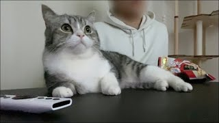 週末は猫と一緒に映画鑑賞するに限ります。