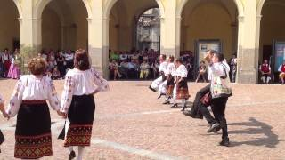 Damul danza rumena