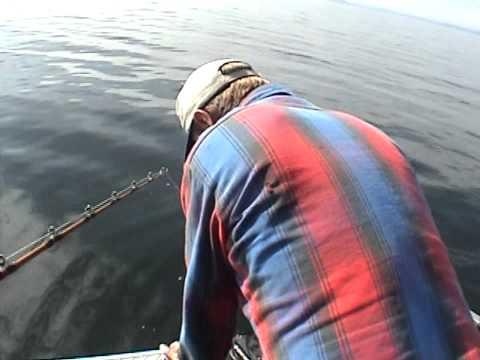HALIBUT FISHING IN THORNE BAY ALASKA