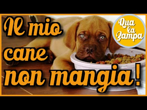 Il Mio Cane Non Mangia 1 Parte Le Cause Qua La Zampa Youtube
