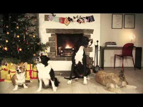 Trained Dogs Bark Jingle Bells