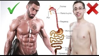 Почему не растут мышцы? проблемы с пищеварением