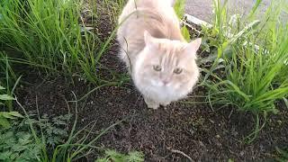 Бадди поймал кошку 2