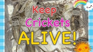 How to Keep Feeder Crickets Alive!